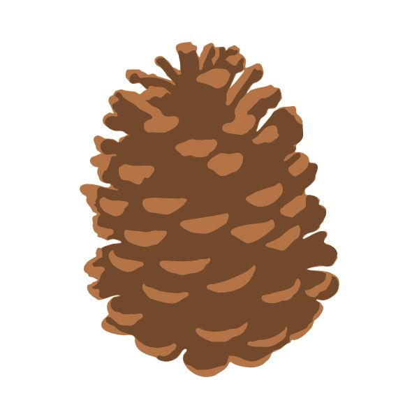 Pine Cone clipart simple 225 Pine nature images Pinterest