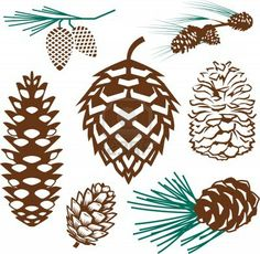 Pine Cone clipart simple Photo  Pinecone Pine a