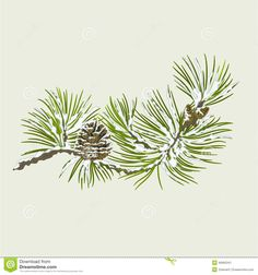 Pine Cone clipart snowy Pine Images Cone  Download