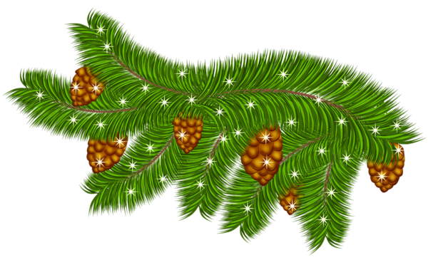 Pine Cone clipart snowy 0 Gallery Christmas 0 PNG