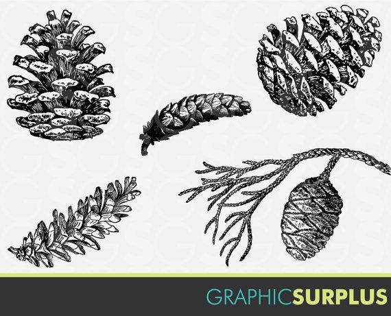 Pine Cone clipart vector Art Art similar Etsy on