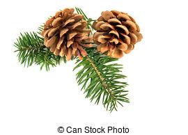 Pine Cone clipart vector Pine photography christmas Photos Stock