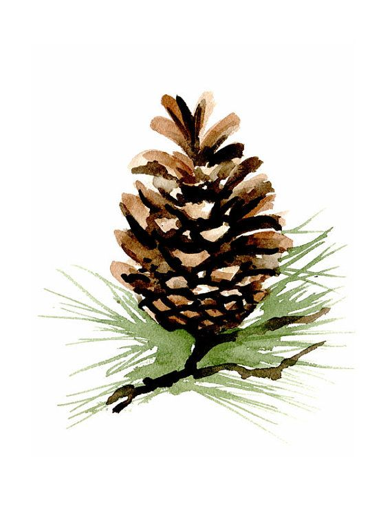Pine Cone clipart coniferous forest Art on kids Painting Decor