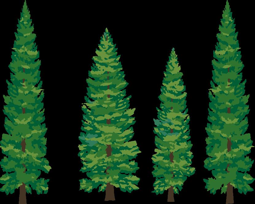 Pine Tree clipart Pine tree Cliparting clipart com
