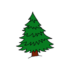 Pine clipart #2