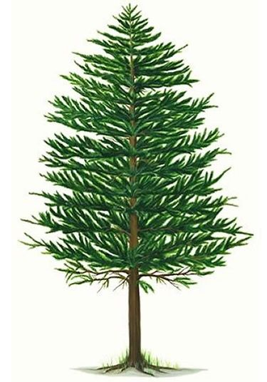 Pine Cone clipart pine needle Pinterest Pine Art Peacock the
