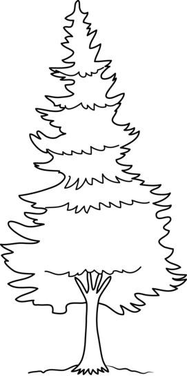 Pine clipart black and white Clip Coloring Pine Tree Free