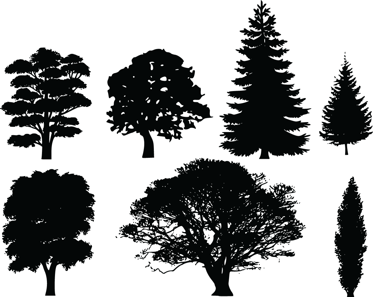 Pine Tree clipart cypress tree Landscape ClipartFest png collections tree