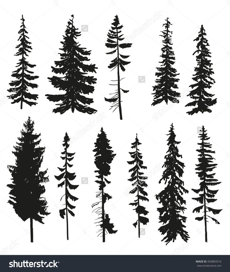 Pine Tree clipart dark forest Silhouette Pine Best Of 25+