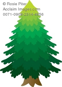 Pine Tree clipart fine Illustration Clip Of Tree Pine
