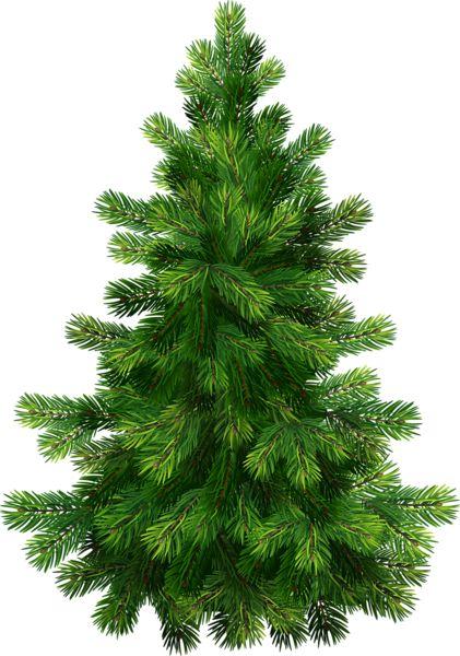 Pine Tree clipart fine Images Transparent on best Clipart