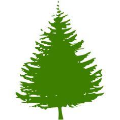 Pine Tree clipart fir tree Fir  of Free Mustaches