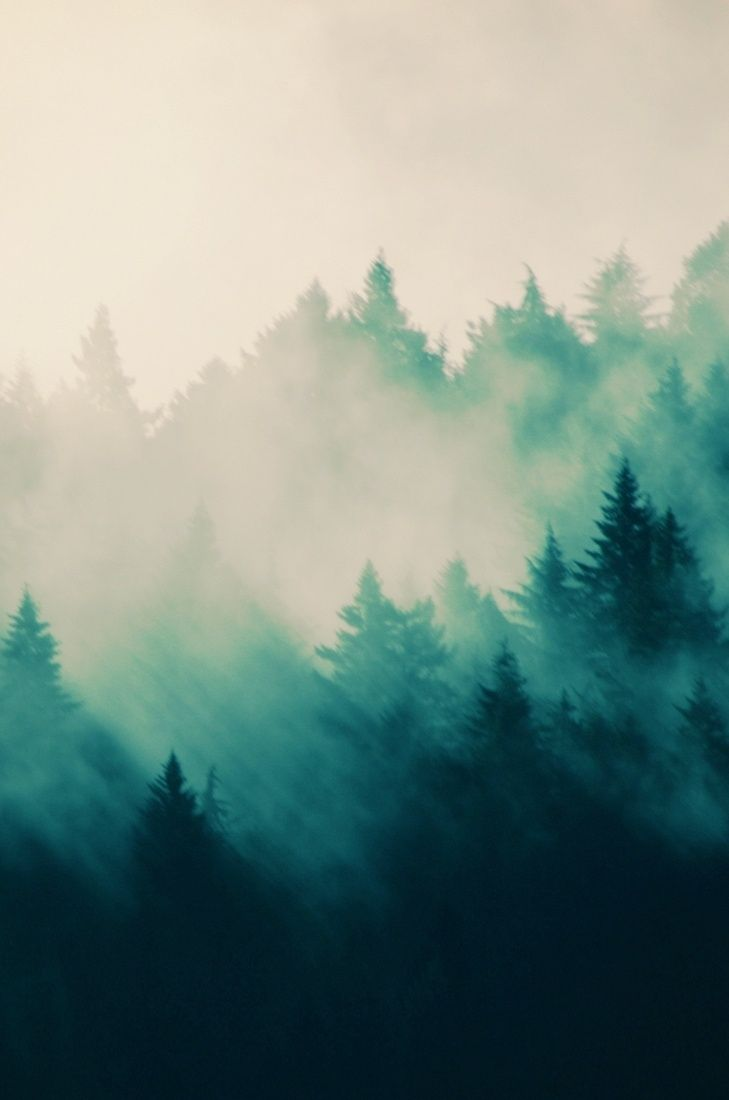Fog clipart background tumblr Ideas Place Best the ForestMisty