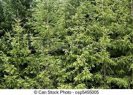 Pine Tree clipart green mountain  Fir green green csp5455005