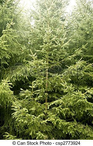 Pine Tree clipart green mountain  Fir green green csp2773924