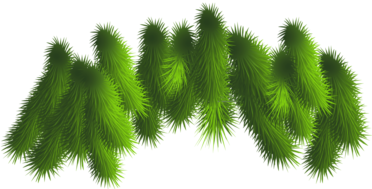 Branch clipart christmas Branches size Transparent  PNG