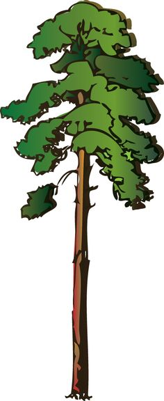 Pine Tree clipart many tree Clipart  on Pine trees