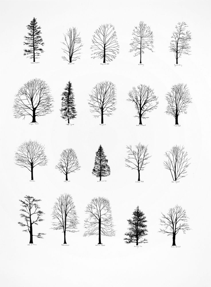 Pine Tree clipart nature walk More Trees and botanicals and