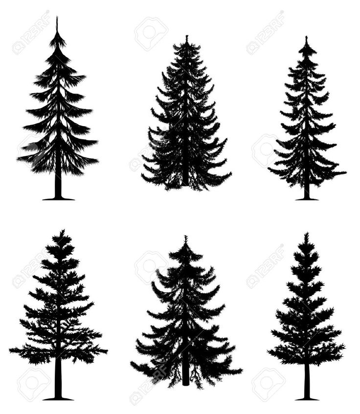 Pine Tree clipart nature walk Free Vectors about Stock Royalty