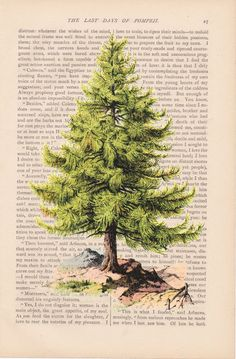 Pine Tree clipart nature walk Vintage by bushying These art