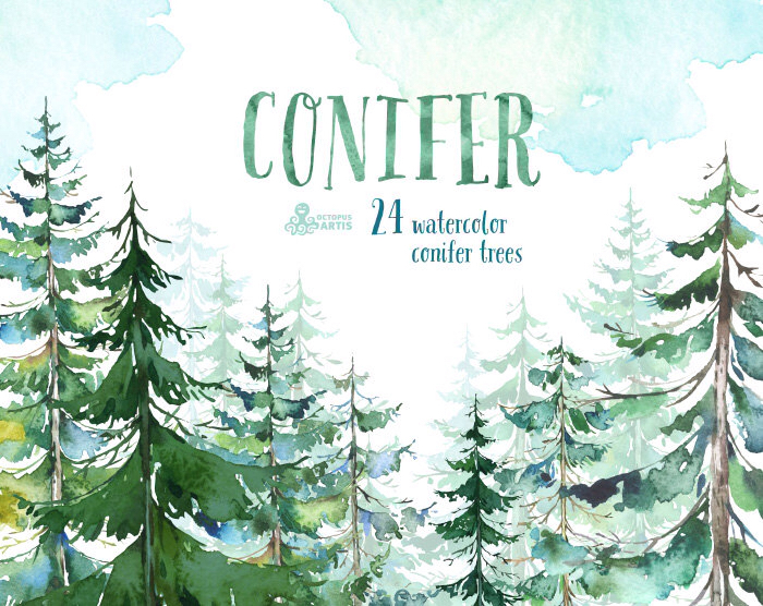 Wood clipart forrest Conifer painted wood pine Watercolor
