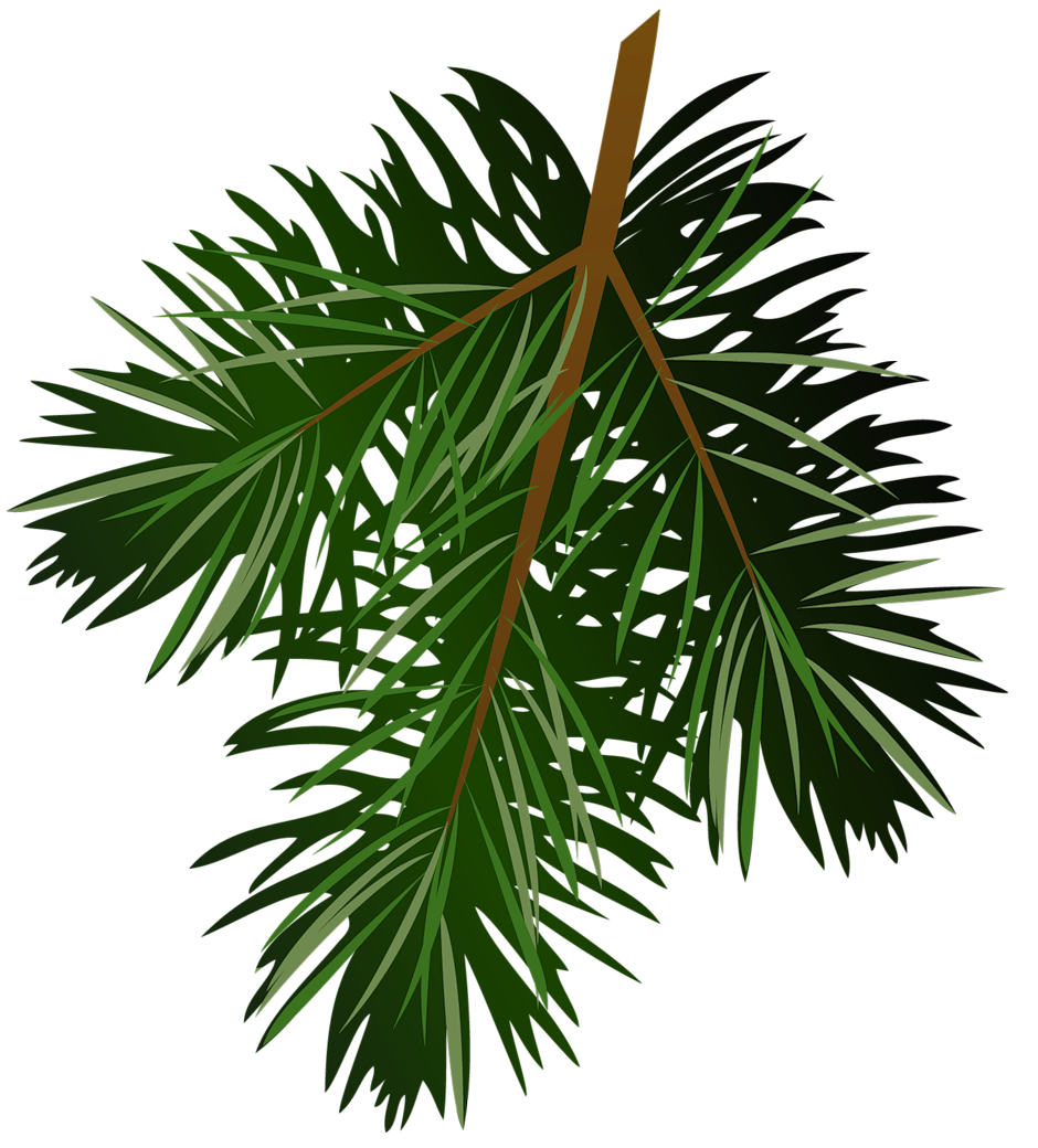 Branch clipart pinecone Cliparts co Art Clipart Branch