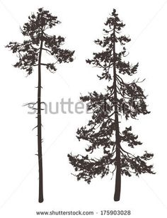 Pine Tree clipart real  Printables two a on