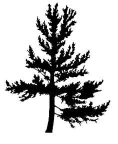 Pine Tree clipart real  1s flexible SilhouetteSilhouette Tree