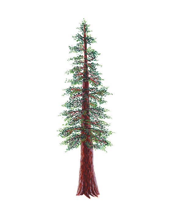 Pine Tree clipart redwood Best 14 tattoos and Pinterest