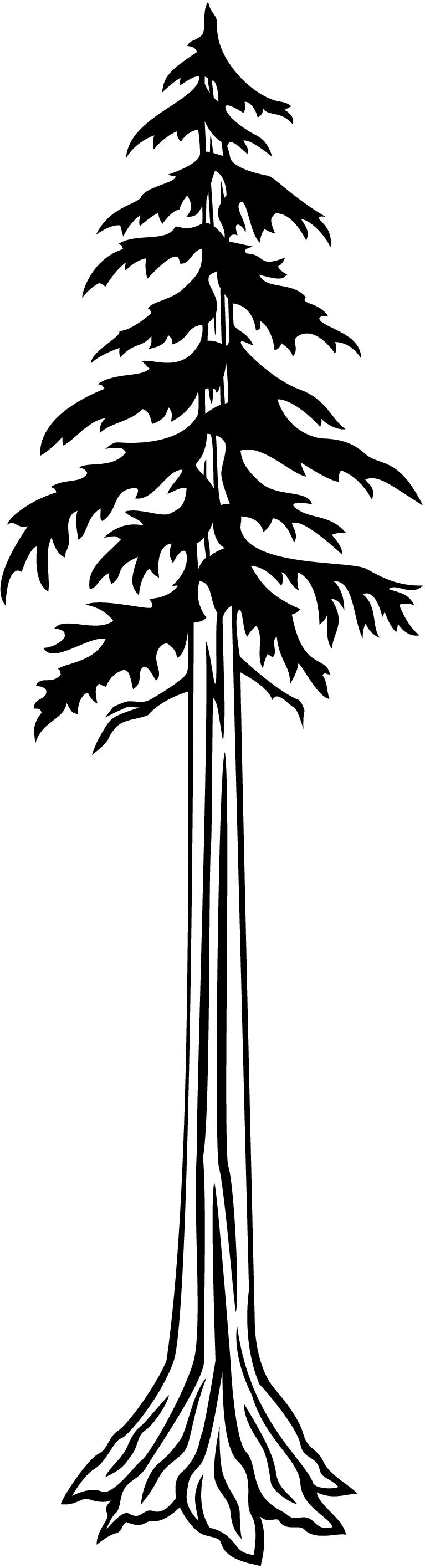 Pine Tree clipart redwood Redwood cliparts Tree Clipart Redwood