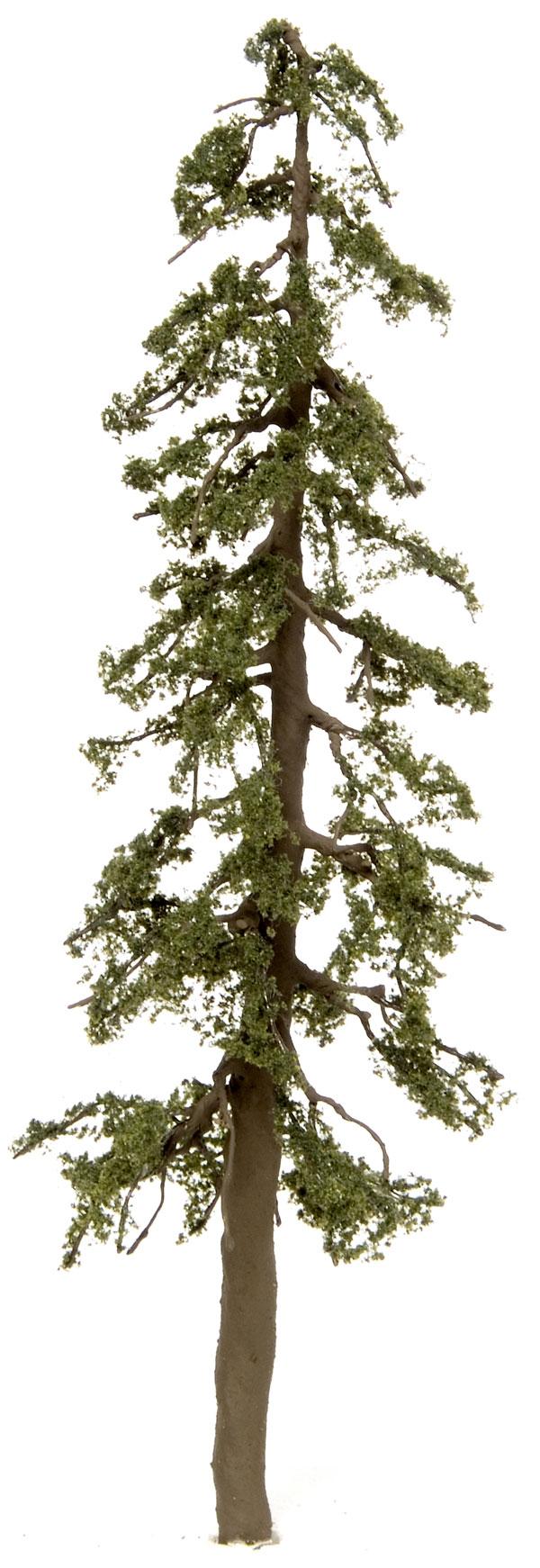 Pine Tree clipart redwood Clip Cliparts redwood Redwood Download