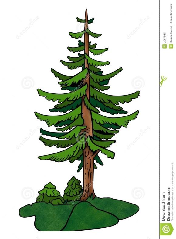 Pine Tree clipart redwood Clipart Redwood redwood tree tree