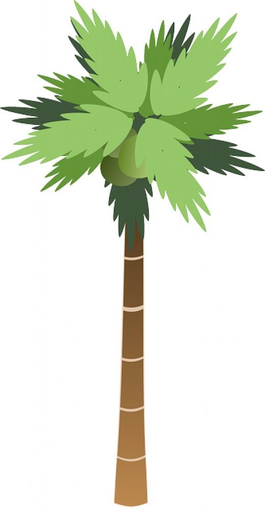 Tree clipart tall #5