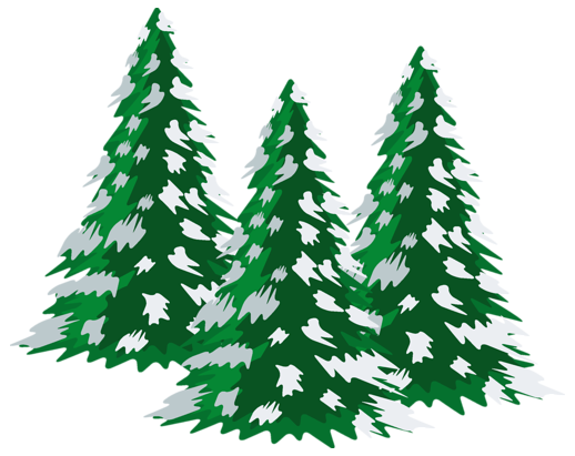 Pine clipart winter PNG Clipart collection Green clipart