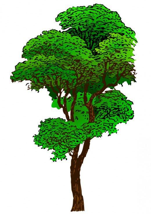 Tree clipart tall #3