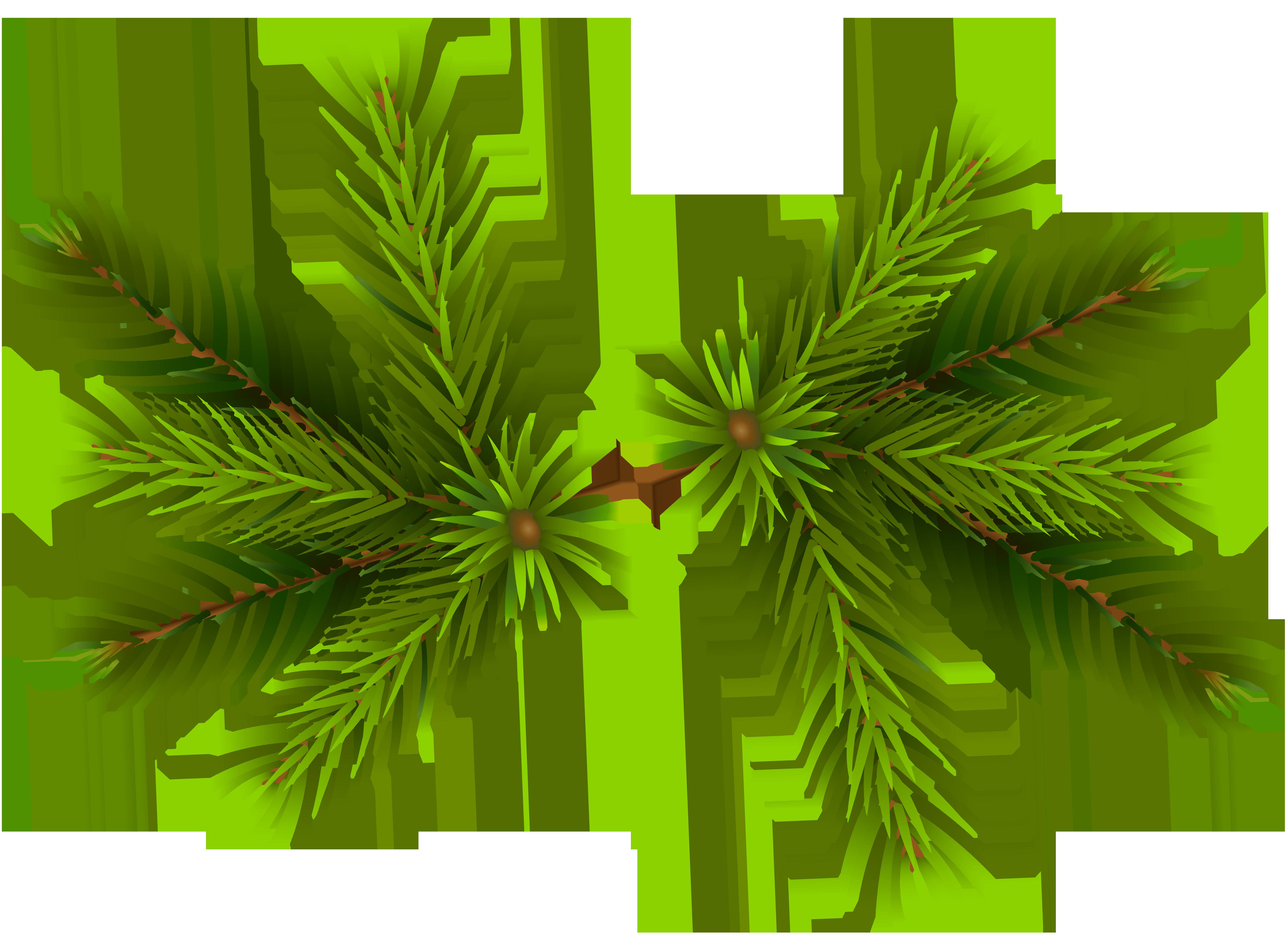 Pine clipart transparent Branches Image Art Transparent