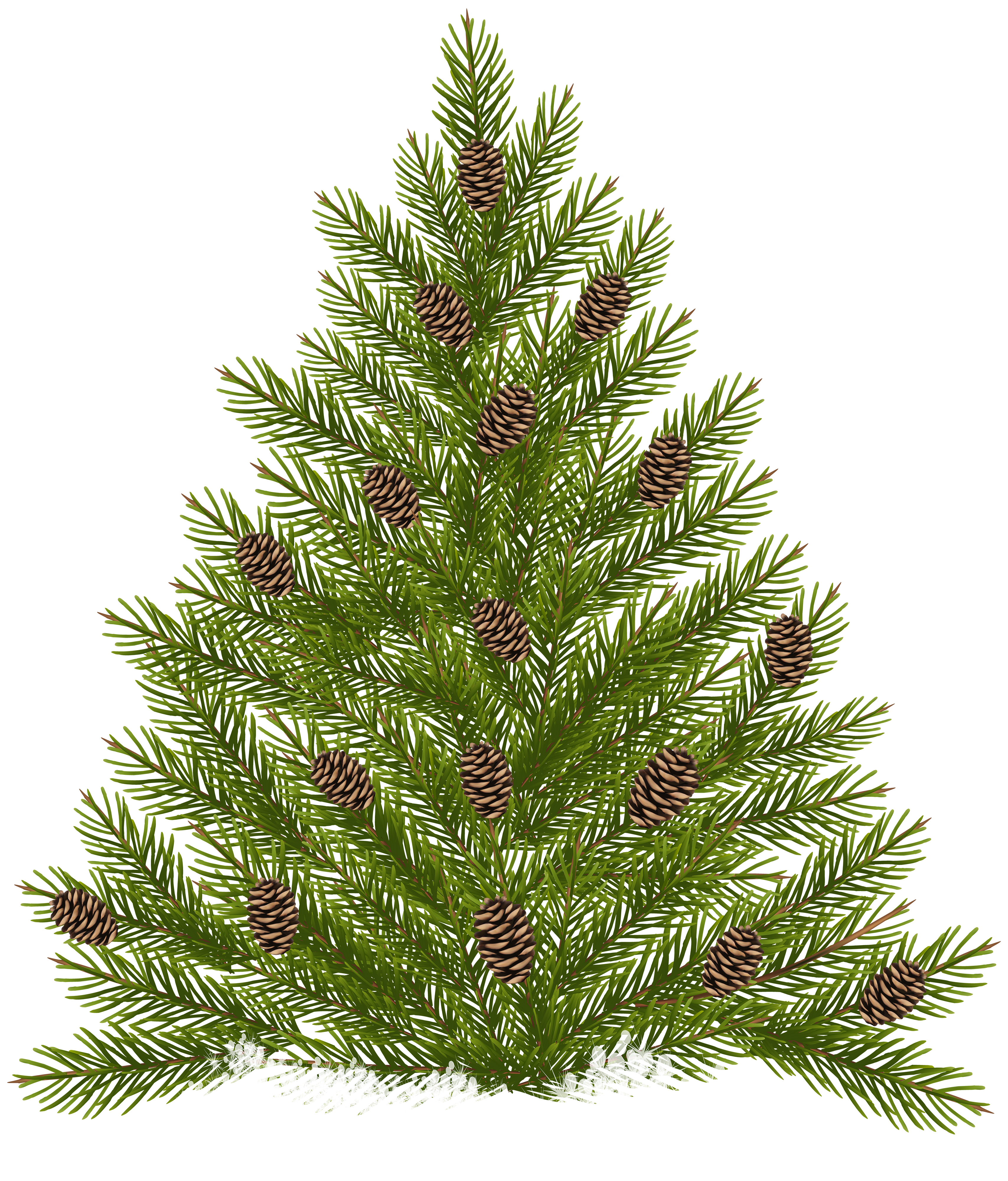Pine Tree clipart transparent Tree Gallery full Cones size