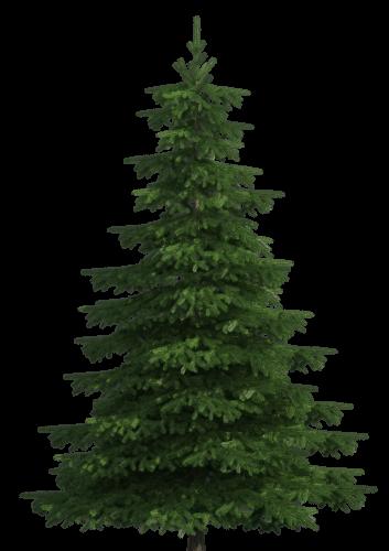 Pine Tree clipart transparent Pine Clip Art Pine Realistic