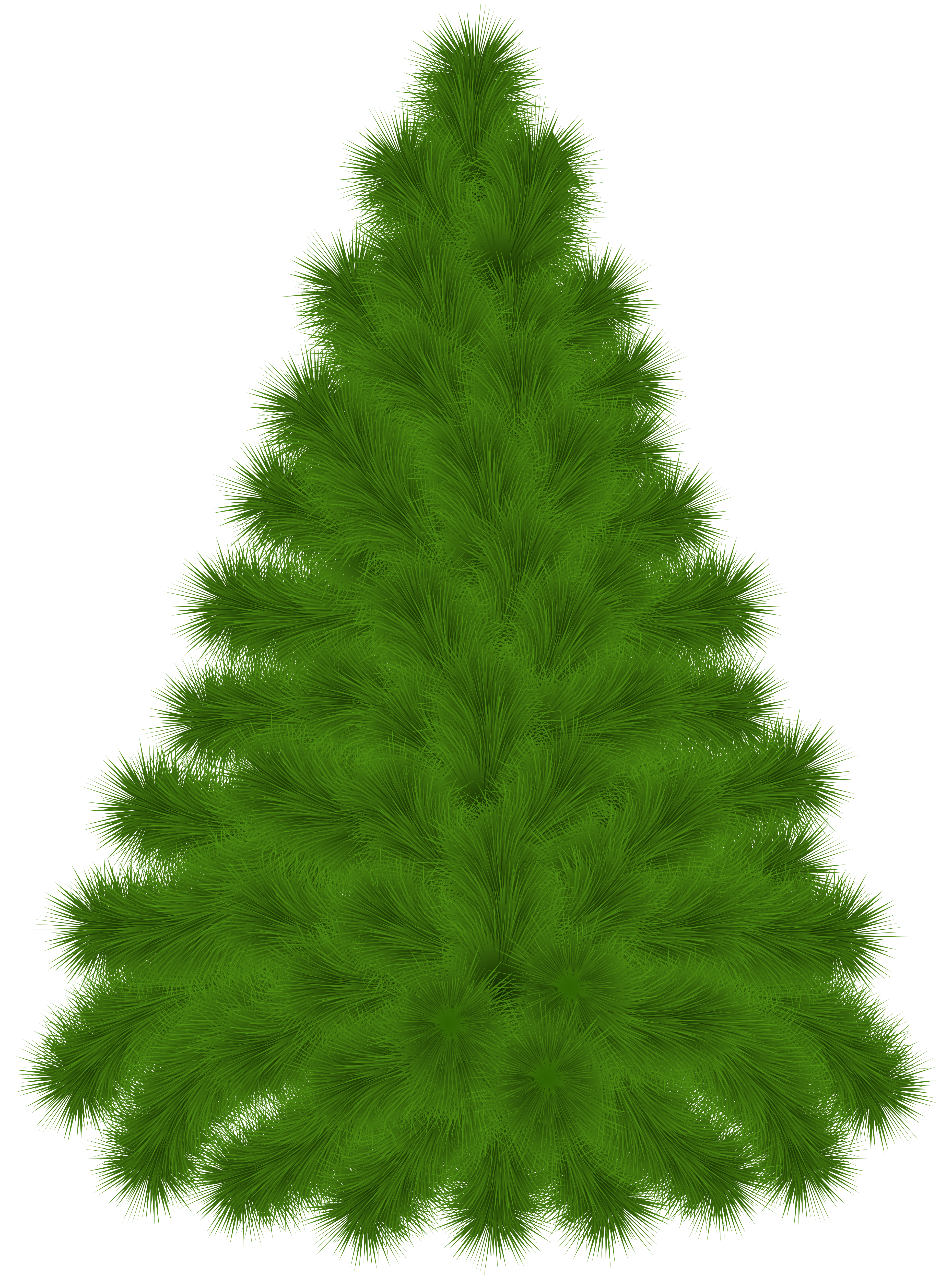 Pine Tree clipart transparent Tree  full Clipart size