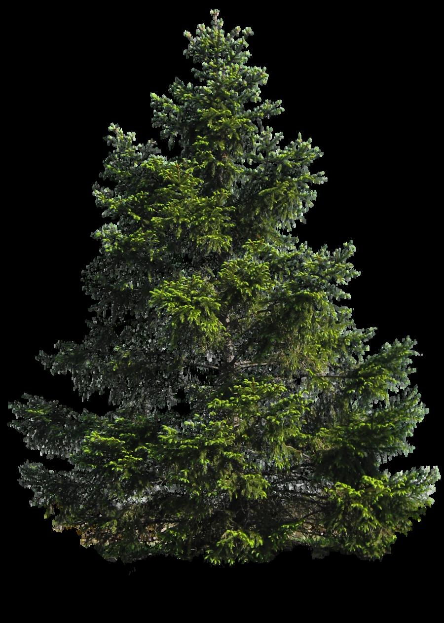 Pine Tree clipart transparent Deviantart @deviantART Moonglowlilly PNG TREE