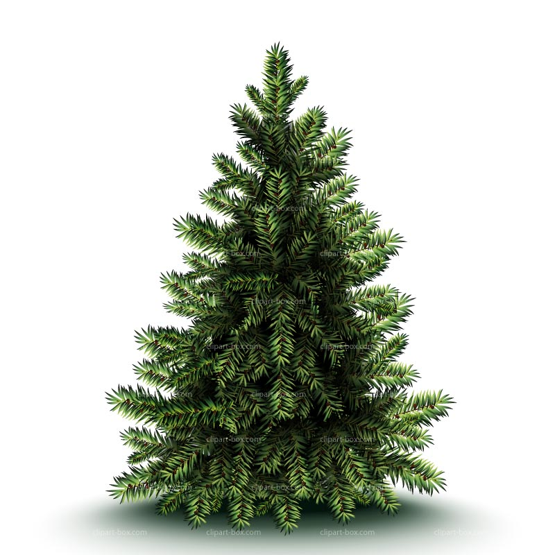 Pine Tree clipart tress Trees Christmas Christmas tree forest