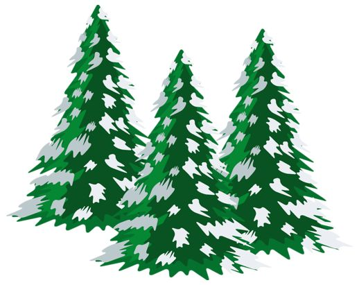 Pine Tree clipart tress Journal Daily about trees on