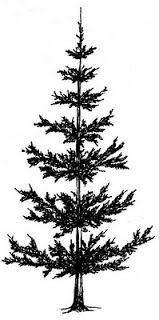 Pine Tree clipart two tree #2 Wall Mural Trees Clip