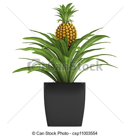 Plant clipart pine apple Or or plant plant Pineapple