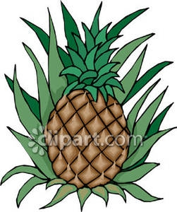 Plant clipart pine apple Pineapple Tree A Royalty Growing