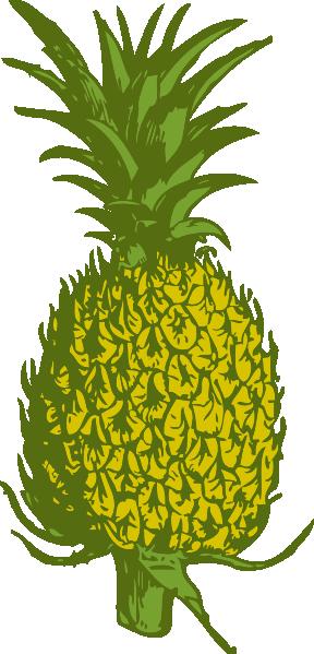 Plant clipart pine apple Com online image Clip art