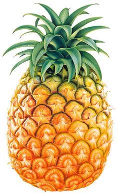 Pineapple clipart single fruit Sonia Pineapple  Photo Fruit