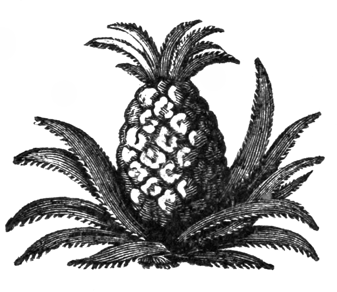 Plant clipart pine apple And Vintage Art Free 8889