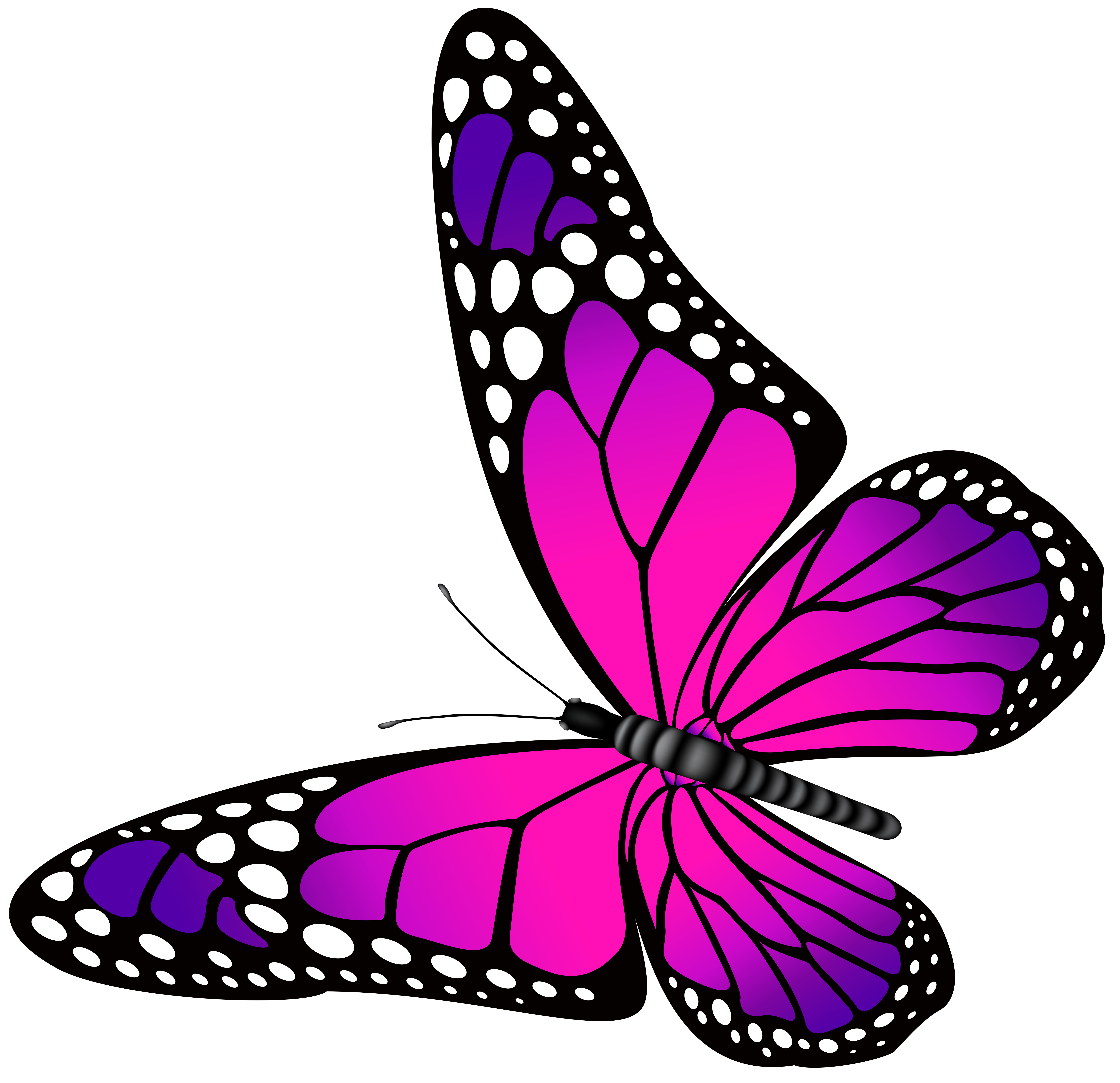 Turquoise clipart purple butterfly #1