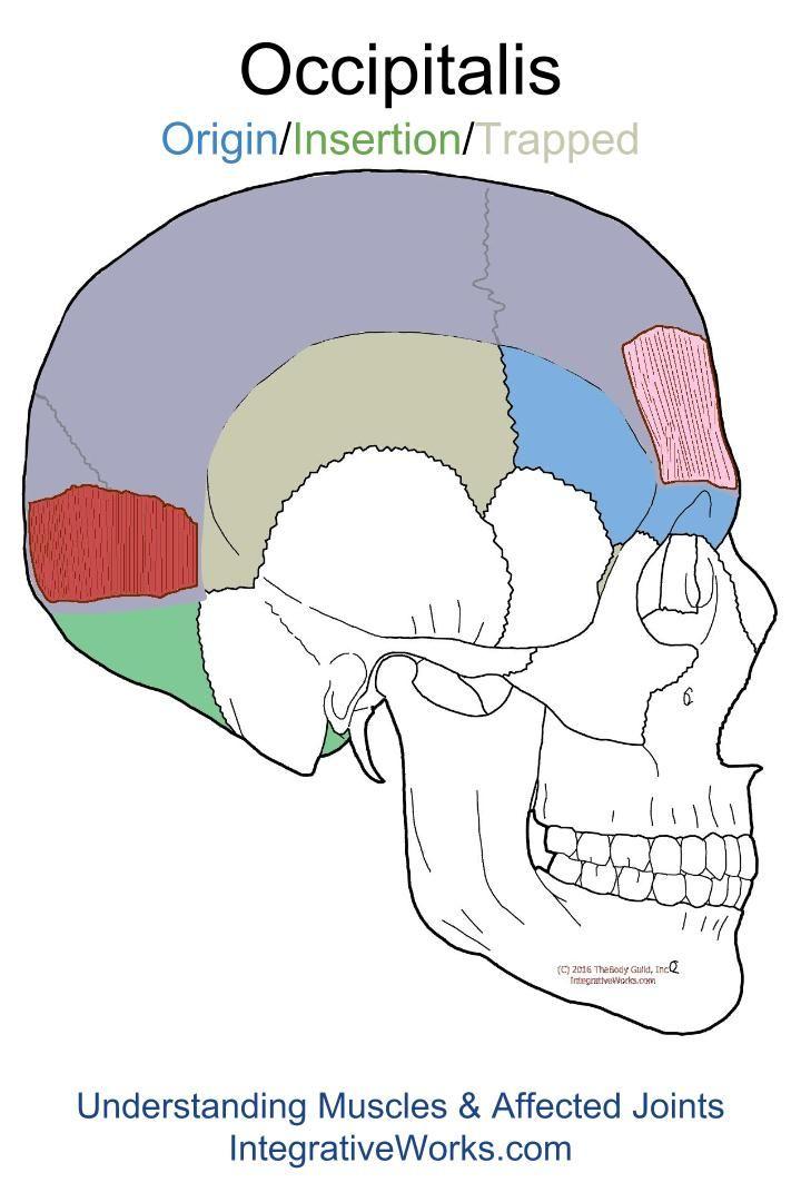 Pink Eyes clipart eye pain Pain Points Headache Understanding ideas